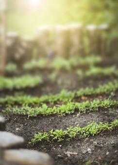 Closeup de hortaliças em um jardim com luz solar acima em um dia ensolarado