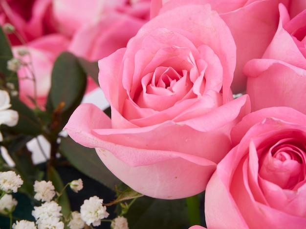 Closeup de lindas flores rosas cor de rosa