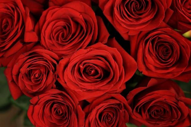 Closeup de lindas rosas com folhas verdes