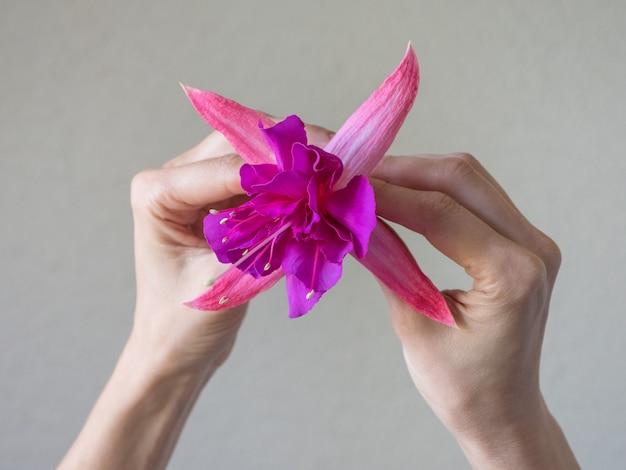 Closeup de mãos de mulher bonita com flor roxa