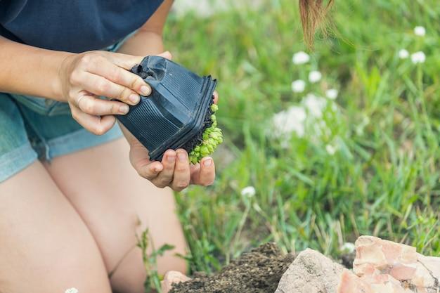 Closeup de mulher plantando flores