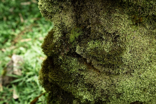 Closeup de musgo com fundo desfocado