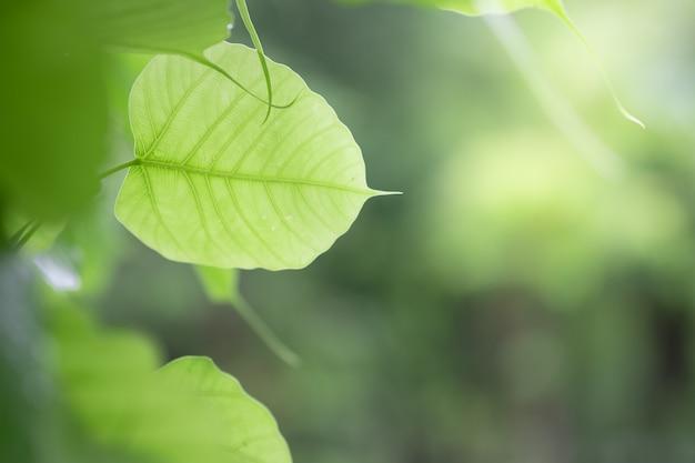 Closeup, de, natureza, folha verde, e, luz solar