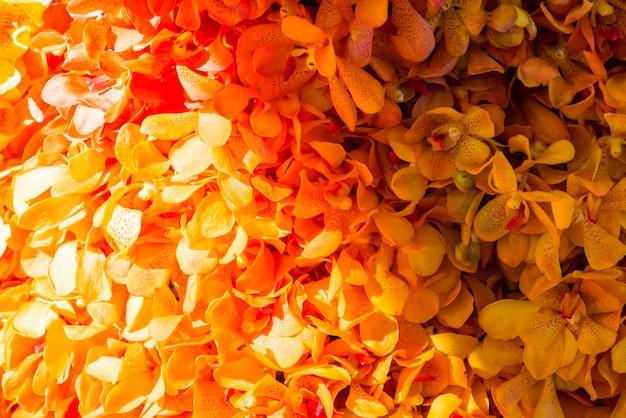 Closeup, de, orquídeas, textured, fundo