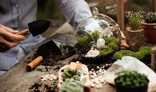 Closeup de passatempo de terrário de plantas