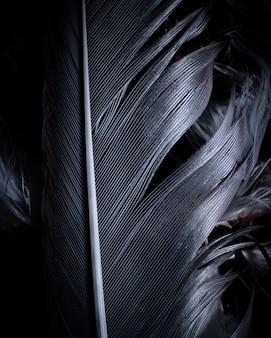 Closeup de penas pretas