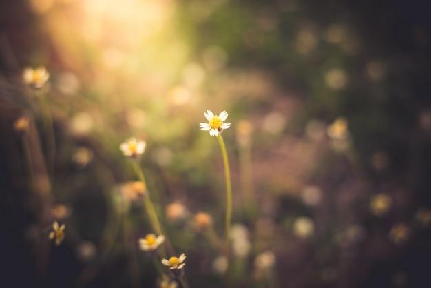 Closeup, de, plantas, dandelions