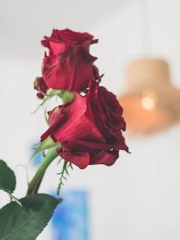 Closeup de rosas vermelhas naturais com espinhos, ideal para encontros românticos e namorados