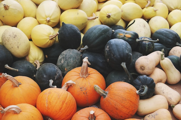 Closeup de squash lot