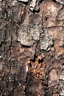Closeup de textura de casca