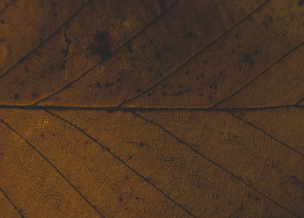 Closeup de texturas de uma folha bonita