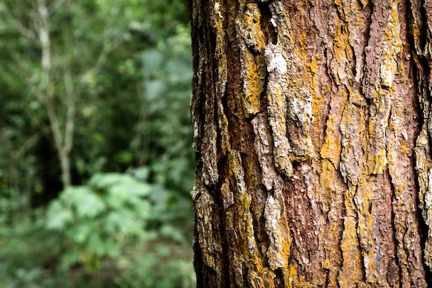 Closeup de tronco de árvore com fundo desfocado