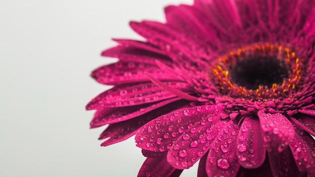 Closeup de uma flor fúcsia