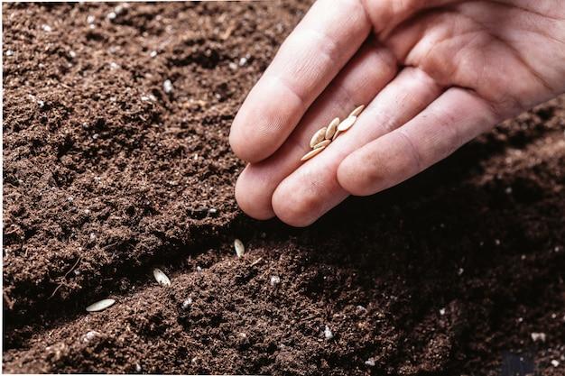 Closeup de uma mão de machos plantando sementes