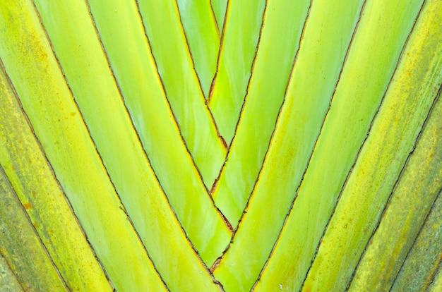 Closeup de uma textura de palmeira