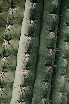 Closeup, de, verde, tropicais, cacto