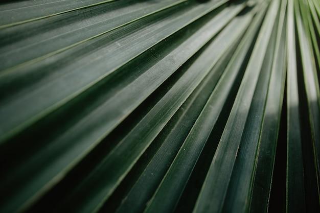 Closeup, de, verde, tropicais, plantas
