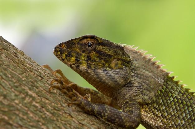 Closeup detalhado de lagarto