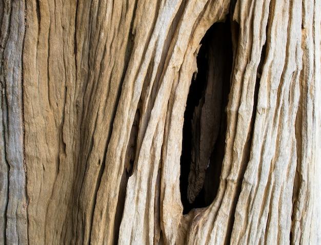 Closeup detalhe de casca de madeira velha rachada
