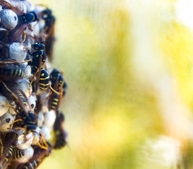 Closeup do ninho de vespas