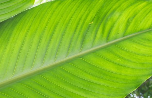 Closeup, em, folha verde, fundo