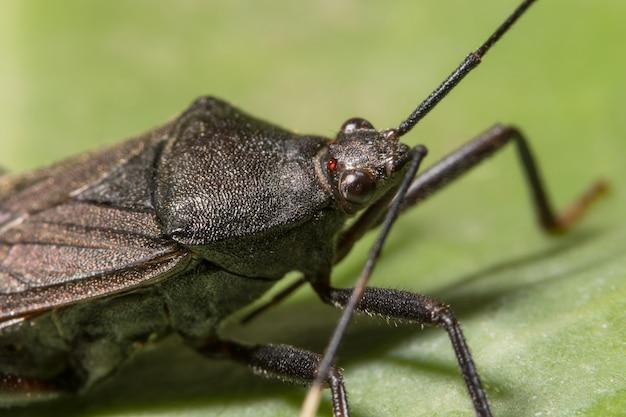 Closeup erro espalhador natureza preta animais selvagens