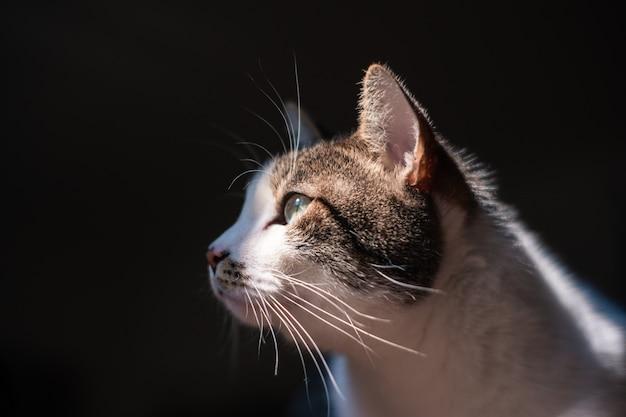 Closeup exibição seletiva de um lindo gato doméstico com olhos verdes claros