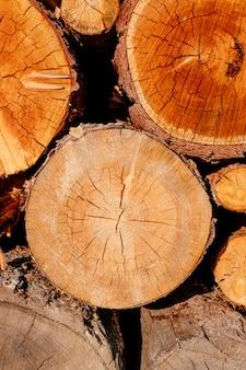 Closeup fatia de madeira cruz logs árvore seção amarelo marrom