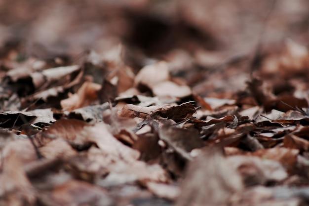 Closeup foco seletivo tiro de seco caído folhas de outono