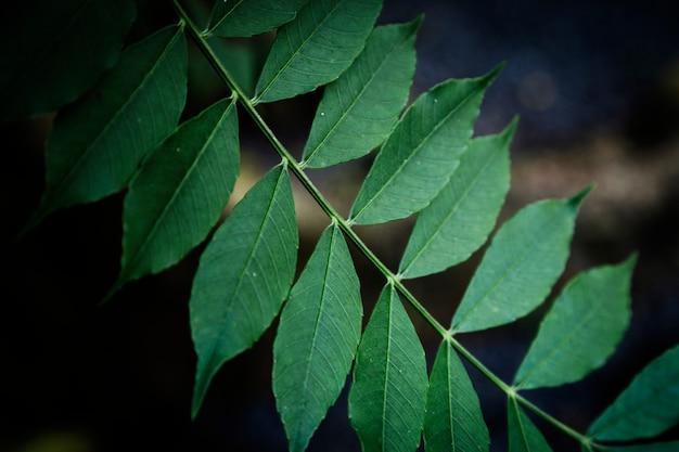 Closeup folhas com fundo desfocado
