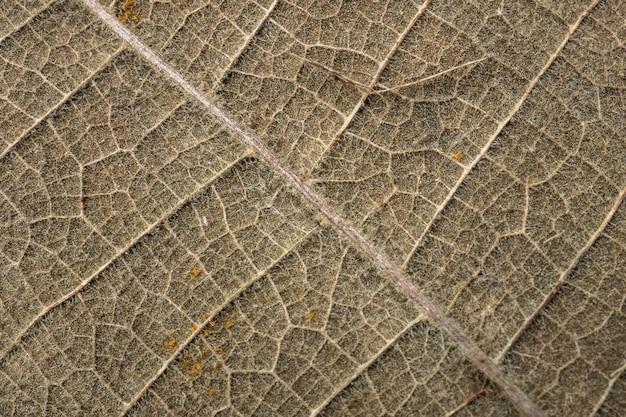 Closeup folhas, padrões de folhas secas