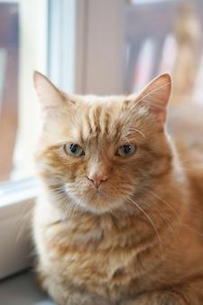 Closeup foto com foco suave de um gato ruivo sentado perto de uma janela