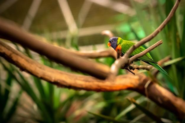 Closeup foto de foco seletivo de um papagaio tropical sentado em um galho de árvore olhando de lado