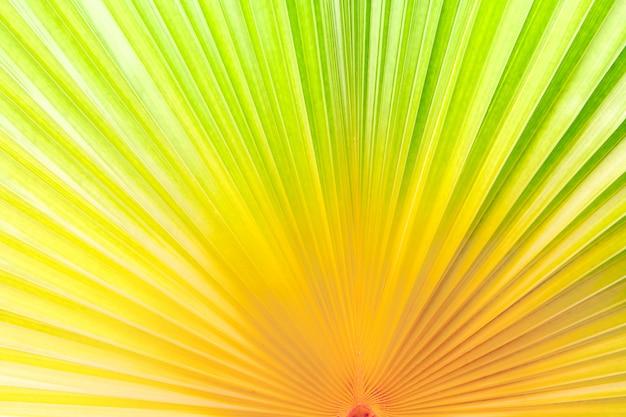 Closeup grediente cor ruído folha de palmeira para fundo abstrato