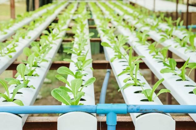 Closeup grupo de rebento de vegetal hidropônico em fundo de fazenda vegetal texturizado