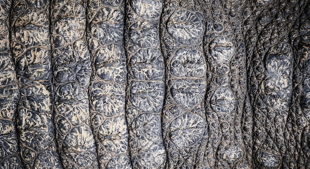 Closeup imagem de fundo de textura de pele de crocodilo