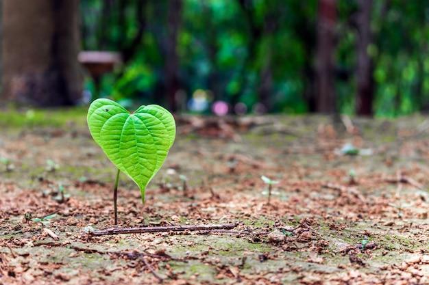 Closeup jovem planta verde crescendo