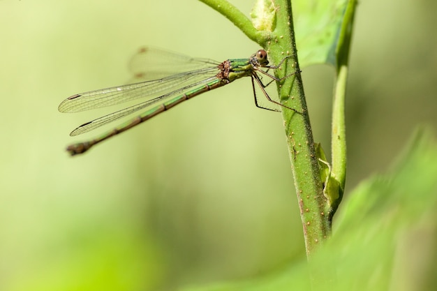 Closeup libélula em uma planta verde