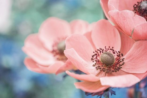 Closeup linda flor rosa no fundo desfocado