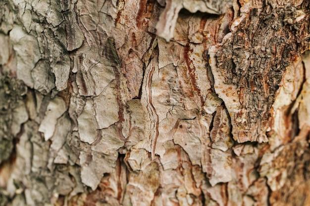 Closeup macro fundo de textura de casca de árvore seca