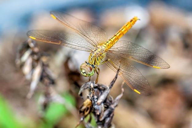 Closeup macro libélula espera em um galho de árvore