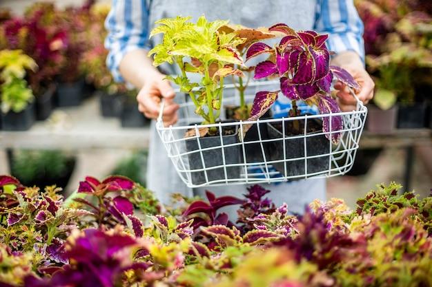 Closeup mulher agrônoma segurando uma caixa com flores naturais frescas e folhas multicoloridas