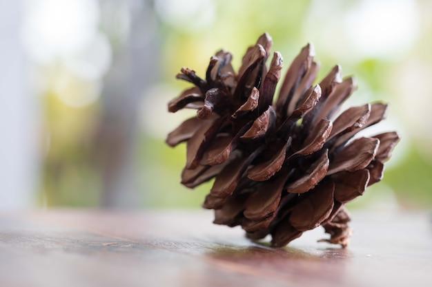 Closeup, pinho, cone, madeira, tabela, natural, fundo
