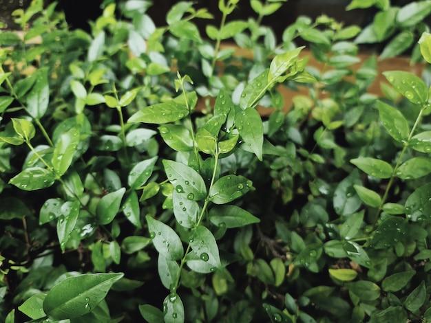 Closeup plantas verdes frescas com gotas de chuva nas folhas
