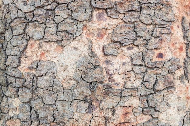 Closeup, rachado, pele, de, tronco, de, árvore, textura, fundo