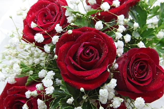 Closeup rosa