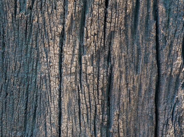 Closeup secada textura de fundo de casca marrom escuro
