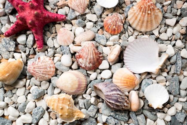 Closeup textura do fundo do mar coberto com conchas coloridas e estrelas do mar