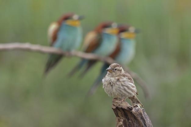 Closeup tiro com foco seletivo de lindos pássaros