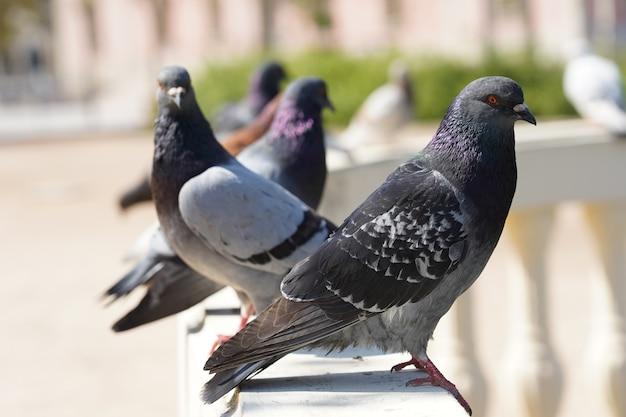 Closeup tiro com foco seletivo de pombos em um parque com vegetação